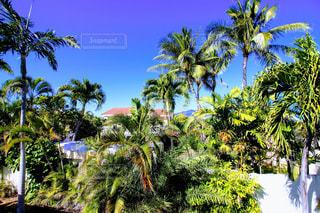 ハワイのビーチの写真・画像素材[1195537]