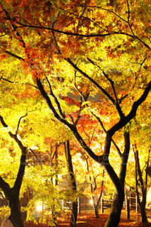 京都の夜の写真・画像素材[1195630]