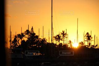 夕日,海外,夕焼け,船,鮮やか,港,ヤシの木,ハワイ,サンセット,ハーバー,船着場,インスタ,マスト