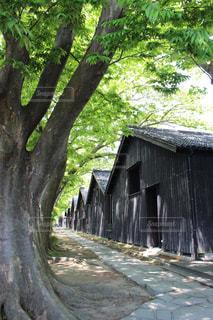 建物の側に木にパスの写真・画像素材[1412117]