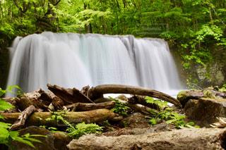 森の中の大きな滝の写真・画像素材[1449489]
