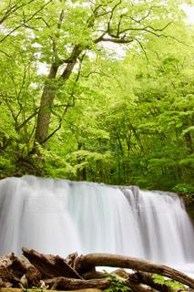 森の中の大きな滝の写真・画像素材[1449490]