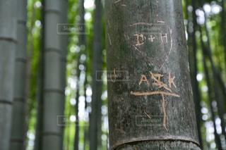 嵐山の竹林の写真・画像素材[1161572]