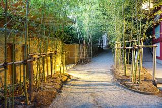 来宮神社の写真・画像素材[1164076]
