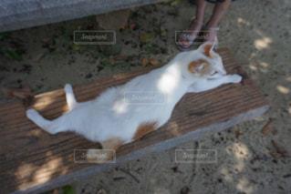 猫,動物,屋外,ベンチ,沖縄,竹富島,まったり,休憩中,ネコ