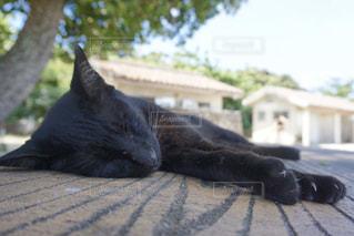 猫,動物,黒,景色,寝転ぶ,樹木,ペット,寝る,人物,黒猫,爆睡,ネコ
