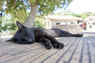 猫,動物,屋外,黒,寝転ぶ,お昼寝,黒猫,おやすみ中,ネコ