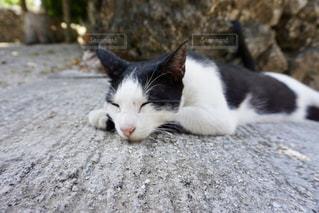 猫,動物,白,黒,白黒,寝転ぶ,ねこ,お昼寝,ネコ