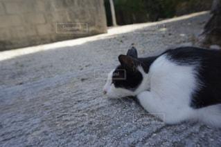 猫,動物,白,黒,ペット,寝顔,人物,横顔,おやすみ中,ネコ