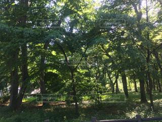 公園の木の写真・画像素材[1162436]