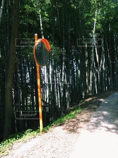 森の中に佇むカーブミラーの写真・画像素材[1161754]
