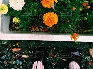 お庭と花の写真・画像素材[1369947]