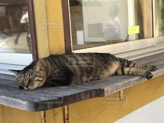 猫,夏,動物,屋外,ねこ,寝る,お昼寝
