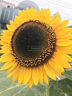 近くの花のアップの写真・画像素材[1162143]