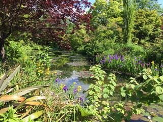 色彩豊かなフラワー ガーデンの写真・画像素材[1163455]