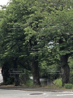 山から流れる小川の写真・画像素材[1202878]
