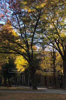 ツリーの横にある空の公園ベンチの写真・画像素材[880662]