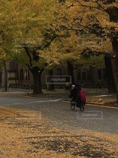 自転車に乗る人の写真・画像素材[881746]