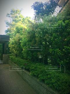 緑のある風景の写真・画像素材[1166021]
