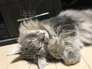 幸せそうに寝るネコの写真・画像素材[1813680]