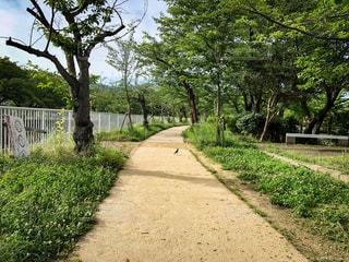 公園,木,緑,ランニング,tree,草木