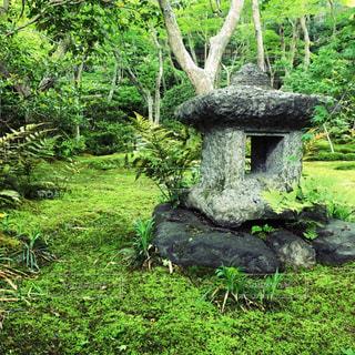 公園の真ん中の木の写真・画像素材[1164324]