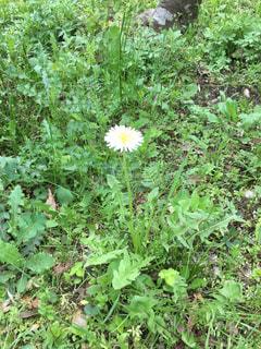 庭園の緑の植物の写真・画像素材[1164923]