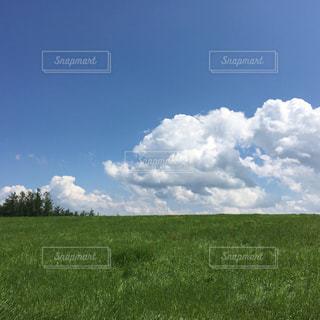 青い空と緑の牧場の写真・画像素材[1166727]