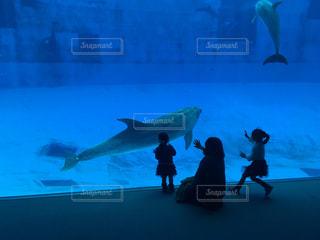 イルカたちと親子の写真・画像素材[1166811]
