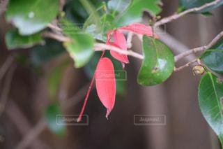 枝に小さな植物の写真・画像素材[1653800]