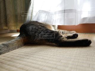 猫,日向ぼっこ