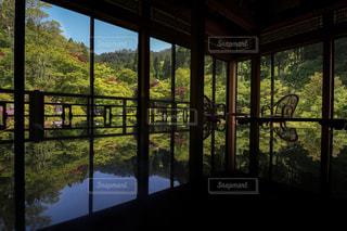 テーブルに広がる新緑の世界の写真・画像素材[1167828]