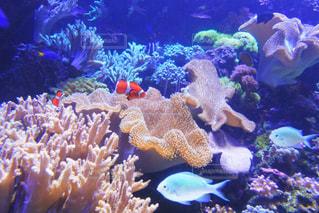 サンゴの水中ビューの写真・画像素材[1316603]