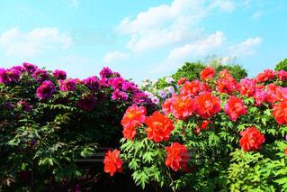 近くの花のアップの写真・画像素材[1368242]