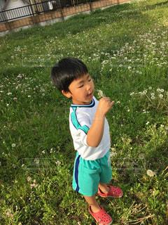 草の中に立っている小さな男の子の写真・画像素材[1169818]