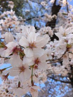 近くの花のアップの写真・画像素材[1172702]
