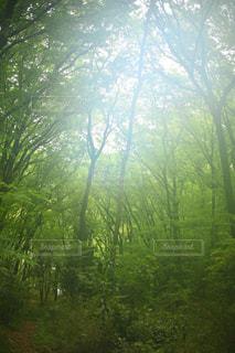 フォレスト内のツリーの写真・画像素材[1169028]