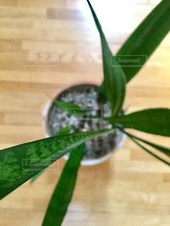 緑の植物の写真・画像素材[1204460]