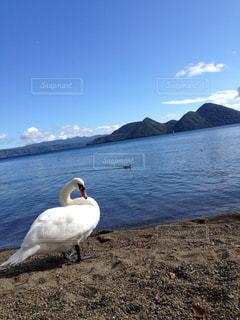 洞爺湖の穏やかな風景の写真・画像素材[1195688]