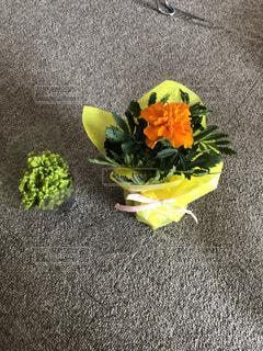 花,屋内,植物,床,梅雨