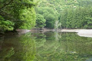 緑豊かな緑の森と川の写真・画像素材[1184714]