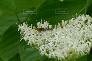 虫の休憩の写真・画像素材[1184726]