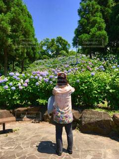花,雨,緑,葉,景色,鮮やか,紫陽花,人,梅雨