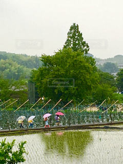 雨の中の登校。の写真・画像素材[1245203]