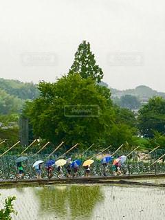 雨の中の登校の写真・画像素材[1245204]