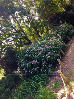 森林,木,屋外,景色,樹木,紫陽花,梅雨,草木,ガーデン,茂る
