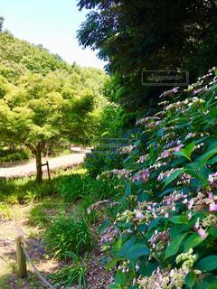 屋外,緑,草,樹木,紫陽花,新緑,梅雨,草木,ガーデン