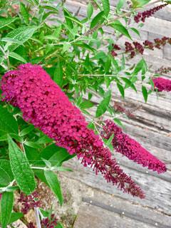周りを明るくするピンク色の花の写真・画像素材[1434774]
