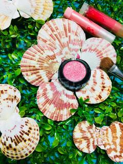 貝殻,リップ,化粧品,ブラシ,メイクアップ,アイシャドウ