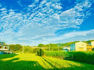 田んぼと白い雲の写真・画像素材[1465796]